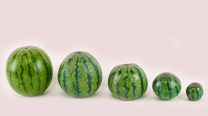 Watermelons that look like breasts