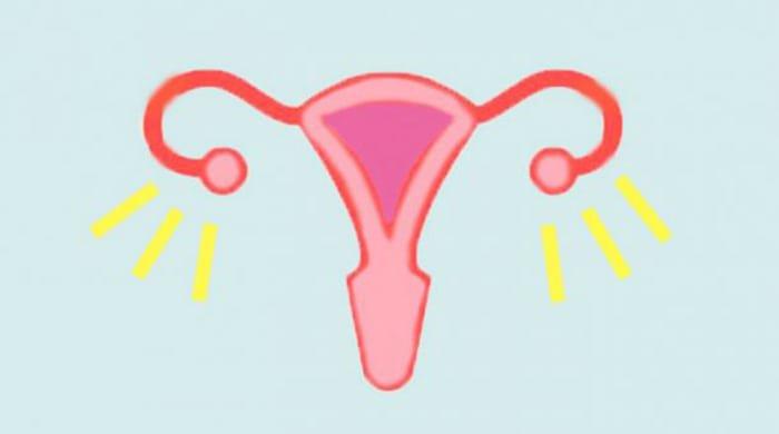 A diagram of a uterus
