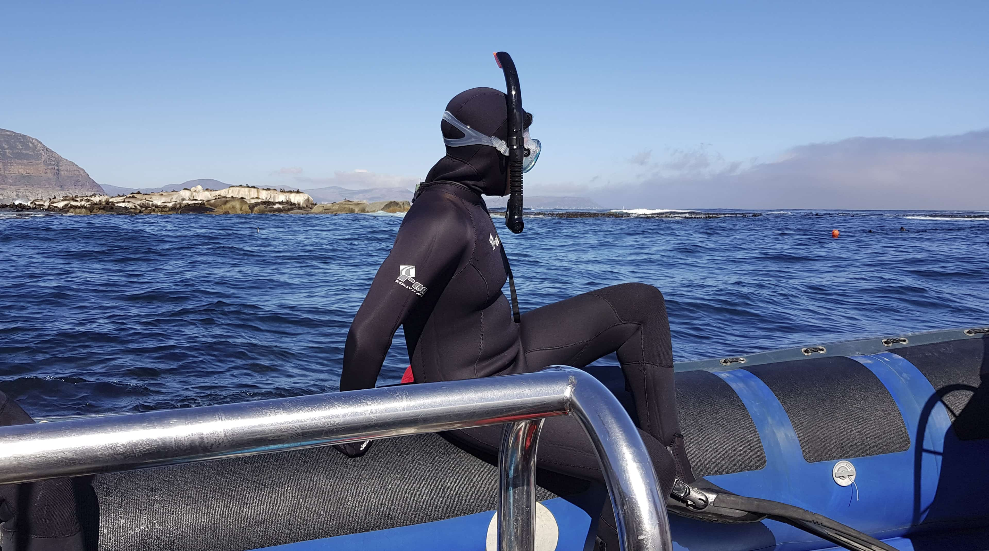 I went snorkelling with seals. Here are 5 things you need to know.