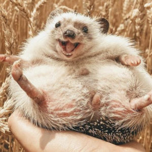 These Adorable Animal Instagram Accounts Will Totally Make Your Day