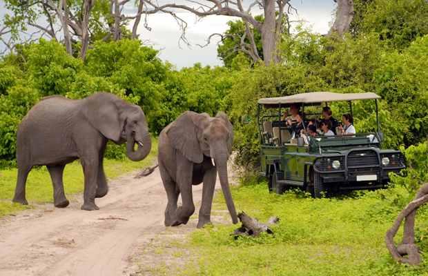Win a safari with Cipla
