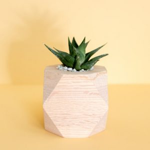 Here's Why Everyone Should Probably Have A Plant On Their Office Desk